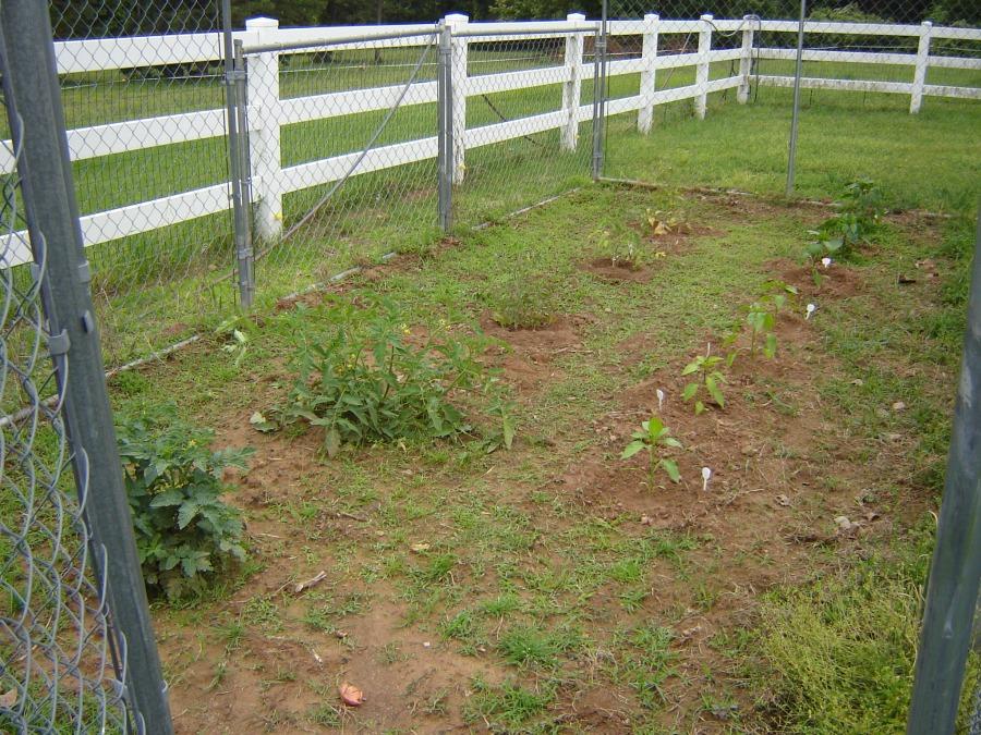 Sm garden 4-20-12