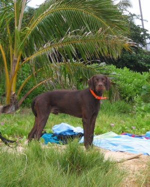 Beau in Hawaii on beach