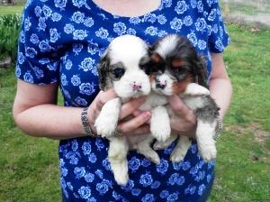 Sophie and sis 5 wks 4-7-13