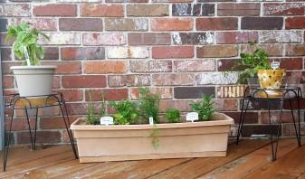 Mini herb garden